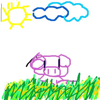 小豬在田裡